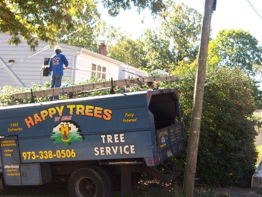 Happy Trees by MGM Tree Service