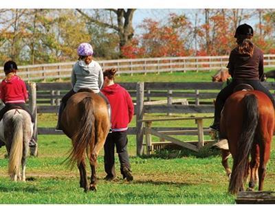 My Saddle Brook Farm
