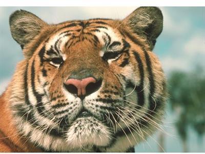 Tiger Creek Wildlife Refuge