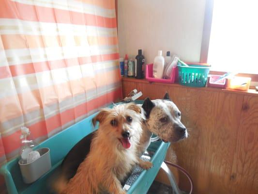 Sup Dogz Bath & Clip
