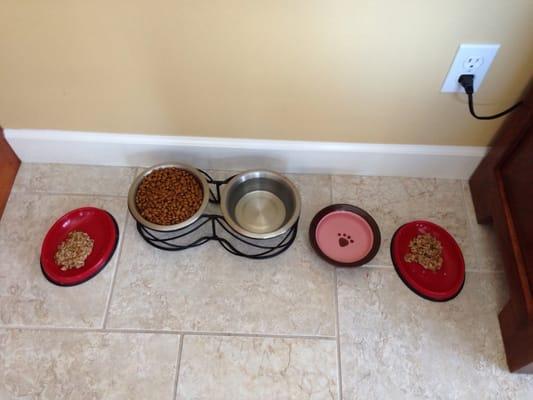 Obedient Paws - Dog Training, Pet Sitting, & Dog Walking