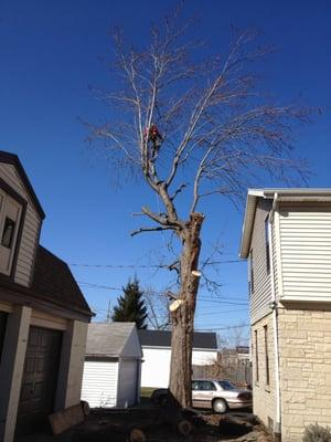 Precision Tree LLC