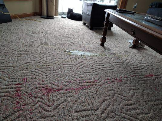 Capitol City Carpet Cleaning
