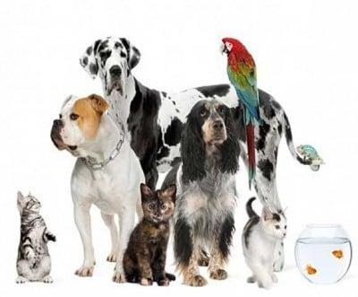 Canines' Companions