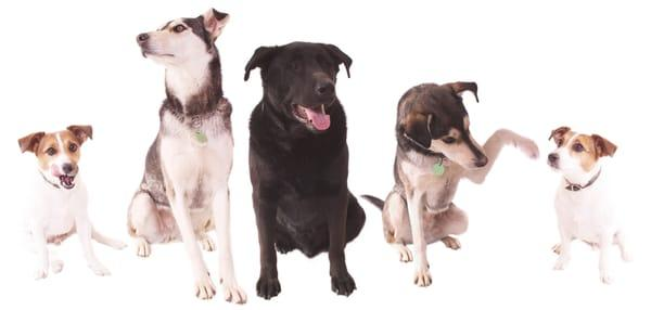 Super Scoopers Pet Waste Removal and Dog Walking