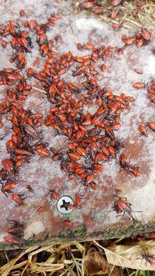 ProActive Pest Management