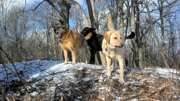 Dog Country Dog Camp