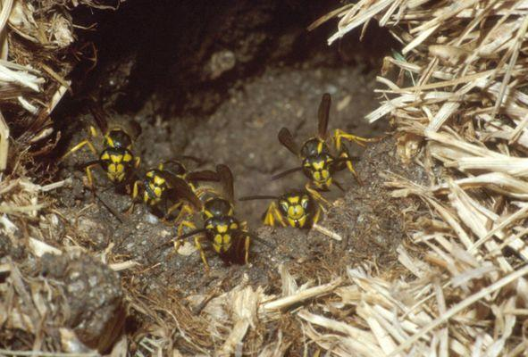 Green Kastle Innovative Pest Solutions