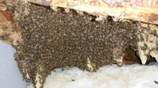Buzzkill Bee Removal