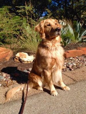 AMPS: Ashley Martin's Pet Services