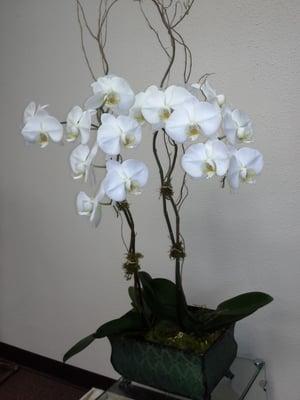 Mille Fleurs Flowers