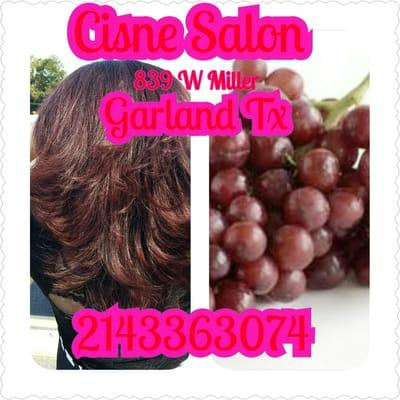 Cisne Salon