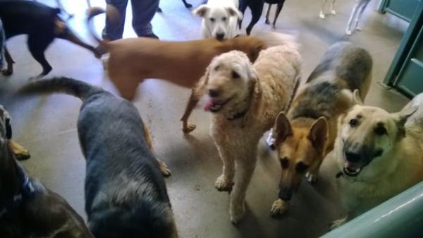 Camp Bow Wow SW Dallas / Cedar Hill Dog Boarding and Daycare