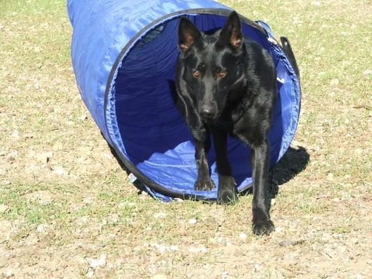 Dragon Crest Dog Training