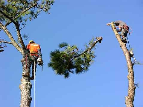 College Station Tree Service