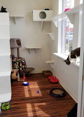 WHISKERS - Luxury Cat Boarding