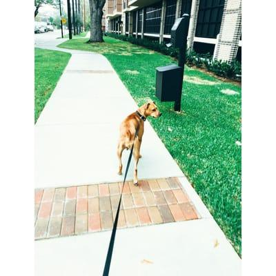 Texas Pet Concierge