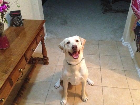 Barking Life Pet Concierge