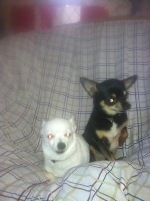 Lucky Dog Company