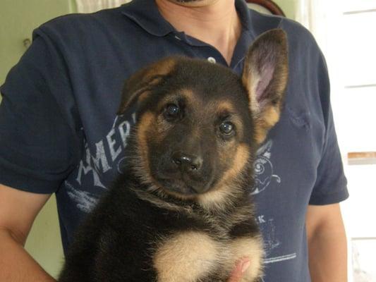 Mogeshe Pet Services
