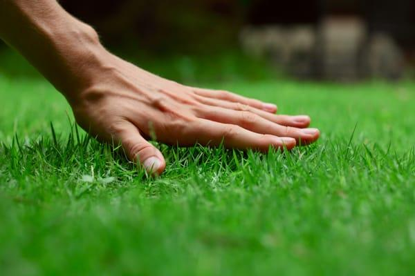 Trim and Proper Mowing and Landscaping