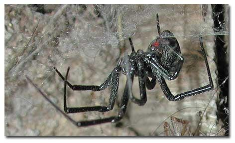 J & M Pest Control