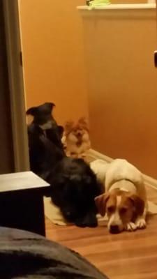 The Daily Dog Training