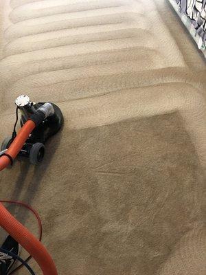 Pureclean Carpet Care