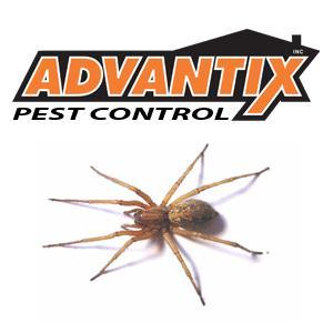 Advantix Pest Control