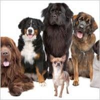 Bark City Pet Sitters