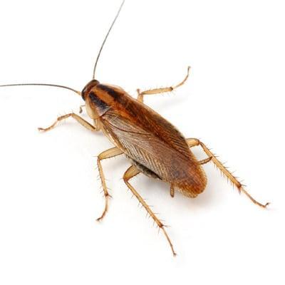 Jeffrey Pest Control
