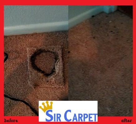 Sir Carpet