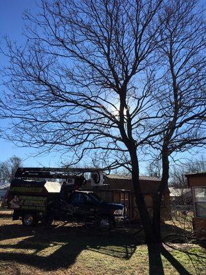 L M Tree service