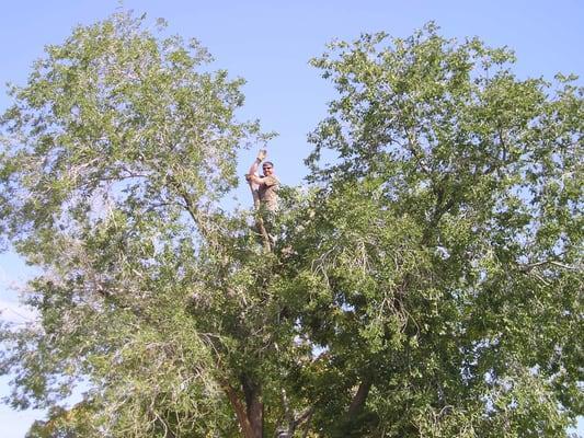 New Leaf Tree Care