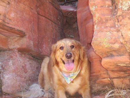 Fetch Pet Care & Pet Sitting