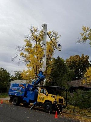 Battle Born Tree Service, LLC