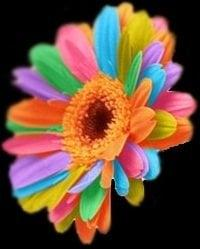 Colorwheel Photography