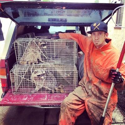 Urban Wildlife Trapping Experts