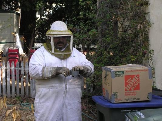 Vees Bees