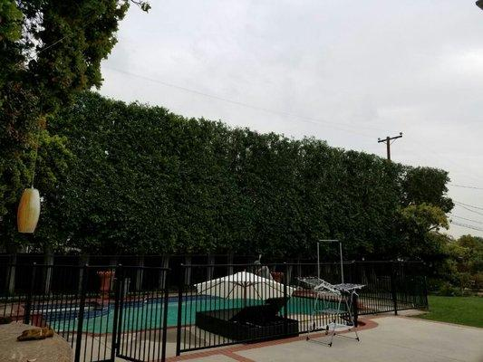 Golden State Tree Service