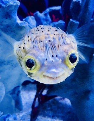 Mark's Tropical Fish