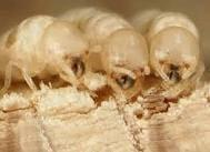 Eary Termite & Pest Service