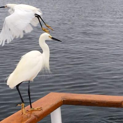 San Diego Fishing Adventures