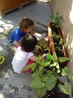 Lingua Natal & Jardin International Preschool