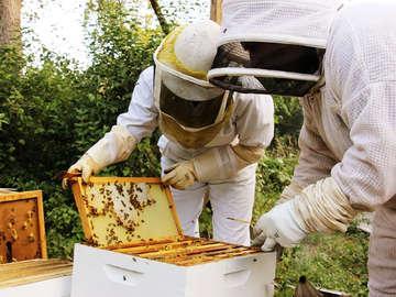 Round Rock Honey Beekeeping Academy