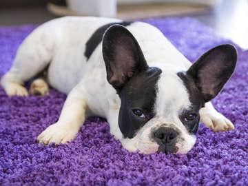 ABC Obedience Dog Training