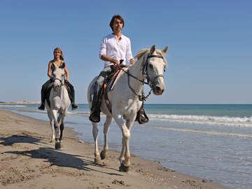 Happy Trails Walking Horses