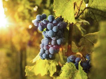 Little Washington Winery