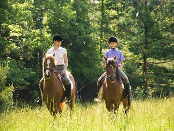 The World of Horses at Flowered Rock Farm
