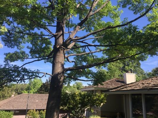 Expert Tree and Yard Services